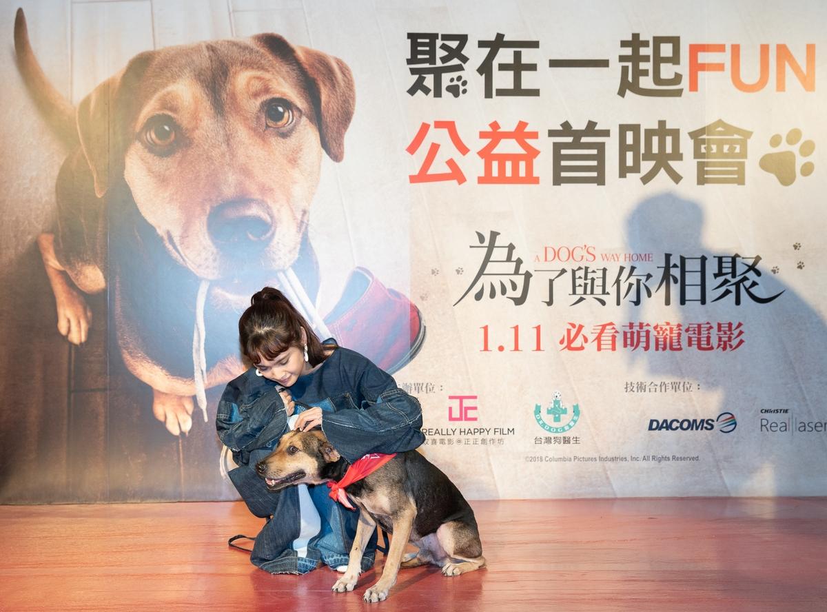 百隻狗狗齊聚看電影! 楊丞琳憶愛犬險失蹤「心臟跳超快」
