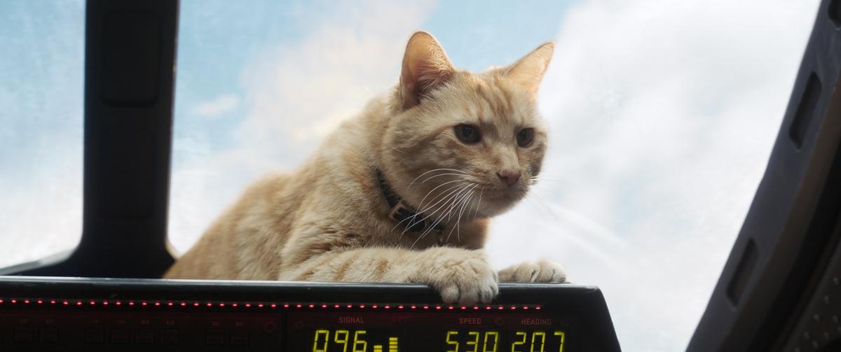 裘德洛首登漫威宇宙耍帥 橘貓「呆頭鵝」搶盡鋒頭