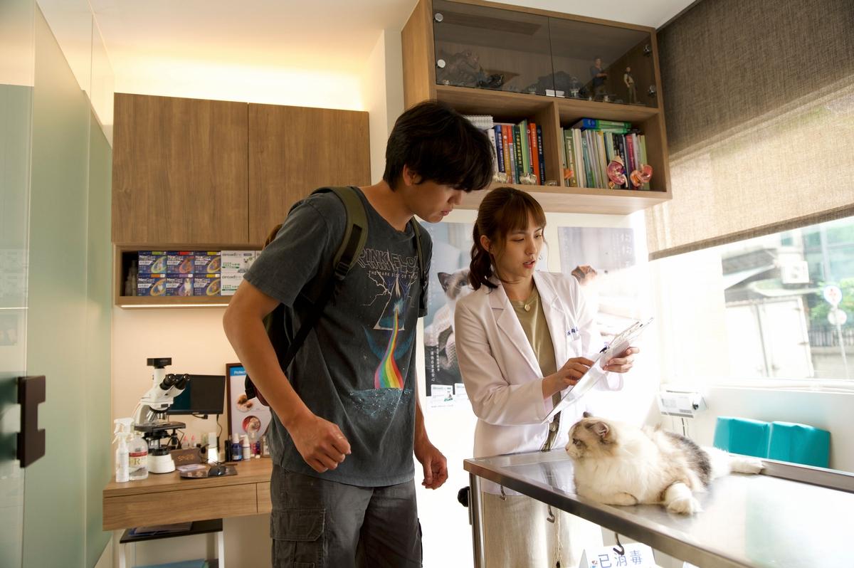風田養貓發現M屬性!「願為牠犧牲生活品質。」