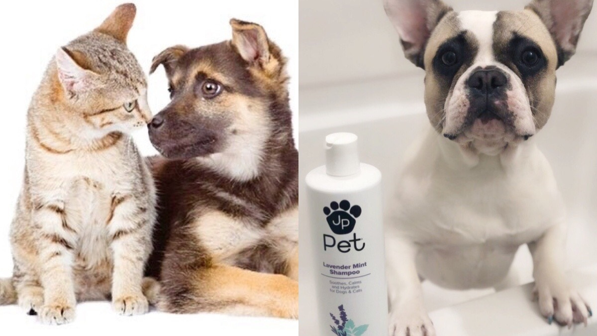 居家防疫別忘了寵愛毛小孩,專屬毛寶貝們的居家洗護系列,在家就幫它洗香香