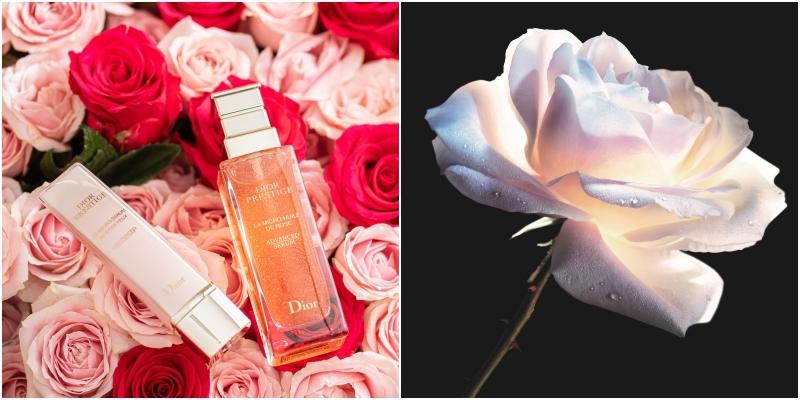 花瓣造型的珍珠壓頭更貼合肌膚,修護效能更加倍!超有實力的升級版玫瑰眼凝萃,用起來!