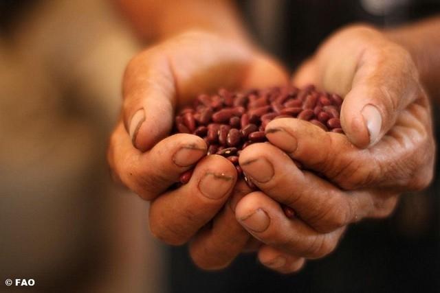 豆豆的一年~2016國際豆類年