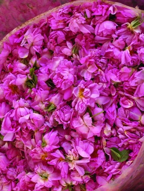 是嬌柔玫瑰 也是美肌保養好物