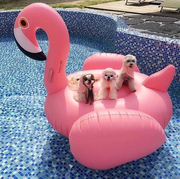 水原希子也大愛❤今夏制霸海灘神物就是它!