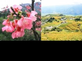 全台8個熱門賞花景點推薦!粉嫩櫻花、繡球花、向日葵絕美花海都收盡眼底,IG打卡來這拍秒被讚