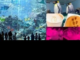 桃園絕美水族館「Xpark」8/7夢幻登場!巨型水族箱、企鵝咖啡館、療癒餐食⋯3大必追攻略搶先看