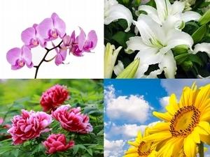 【占卜好好玩】花朵占卜測出遊豔遇指數