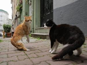貓奴必看 《愛貓之城》帶你從貓咪視角看人生
