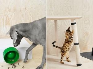 跟毛小孩一起舒適生活!IKEA寵物用品系列以動物視角出發、設計融入家居用品
