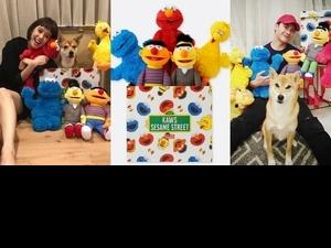 陳庭妮、謝佳見也為「它」著迷!UNIQLO X芝麻街 限量超萌玩偶,11/23開賣啦