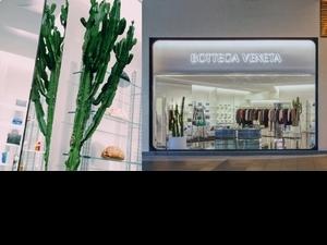 連仙人掌也有高度標準!Bottega Veneta微風信義改裝開幕,每個角落都有Daniel Lee的完美印記