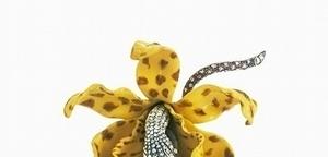 繁花競豔的璀璨國度-Tiffany蘭花現形記