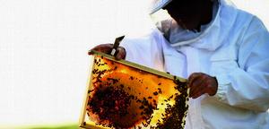 一起拯救蜂蜜  留住金猴年甜蜜肌感