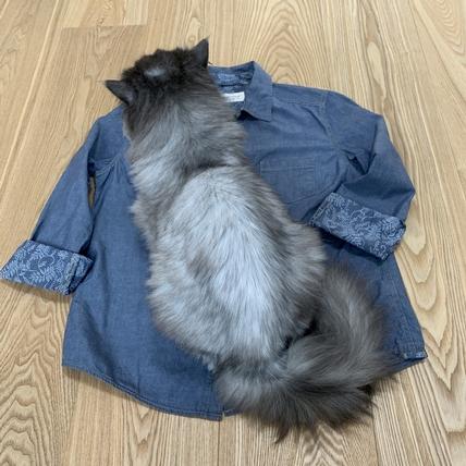 〈俗女日常〉第二件襯衫