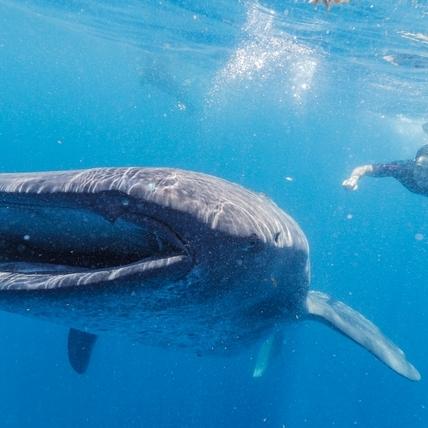 阮經天拍紀錄片呼籲拒吃魚翅! 與鯨鯊夢幻共游「腦子一片空白」