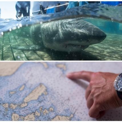 跟著鯊魚愛海洋!雅典錶與OCEARCH締盟,關注鯊魚生態