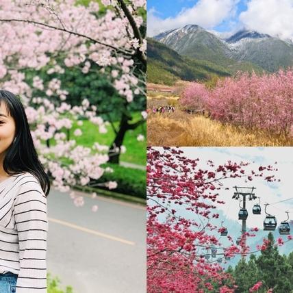 2021全台人氣賞櫻景點推薦!武陵農場、司馬庫斯5大粉紅花海打卡點必追,過年走春行程來這準沒錯