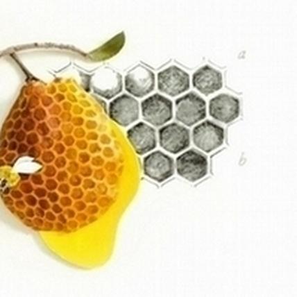 寒冬中為臉蛋加溫   「蜂」存凍齡美肌