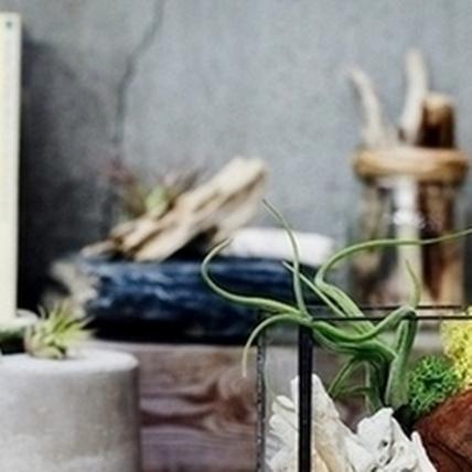 綠手指療癒風,手工造景盆栽正流行