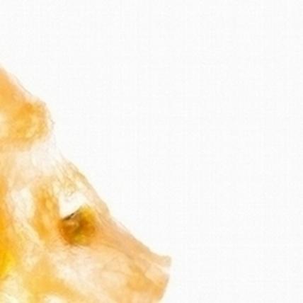 層層捲蔥香  台灣胃─食物肖像系列