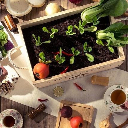 城市裡的綠色微型革命,「肖年頭家夢想市集」實現新世代小農創業夢