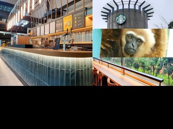 星巴克就能看到可愛動物!「星巴克新竹動物園門市」開幕3大亮點整理:時髦藍綠色超好拍,還能看見綿羊、長臂猿