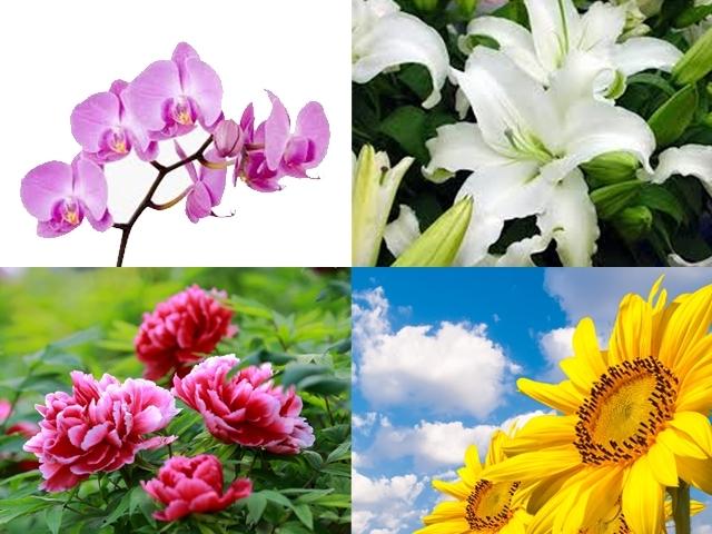 占卜好好玩花朵占卜測出遊豔遇指數