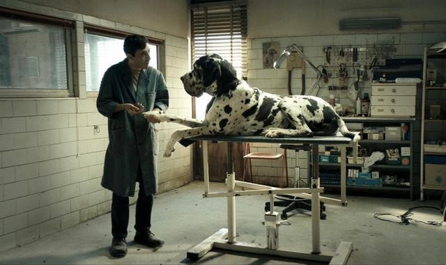 《狗奴人生》(Dogman)