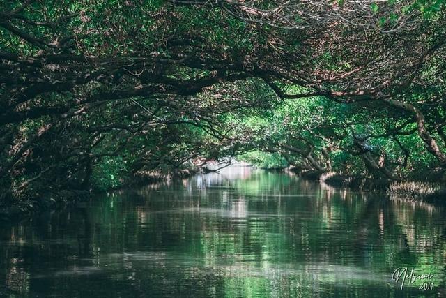 10. 體驗亞馬遜河中冒險航行-台南「四草綠色隧道」