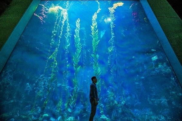 7. 沖繩海水族館的壯觀美景-屏東「海洋生物博物館」