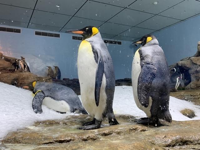 必看亮點1:巨型水族箱、超萌企鵝等13大展區