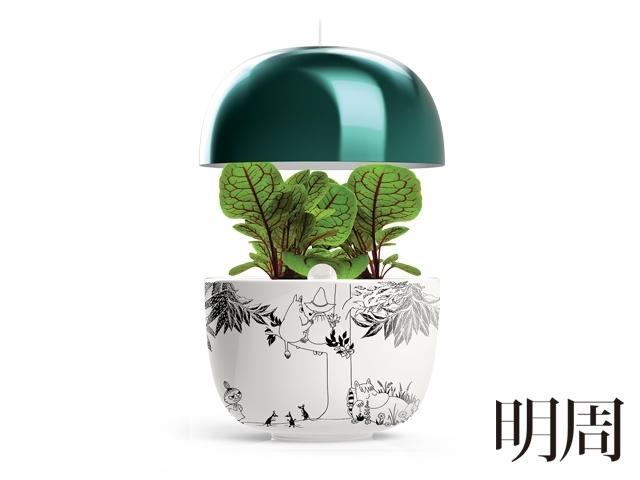 瓶器之戀Vase Infatuation