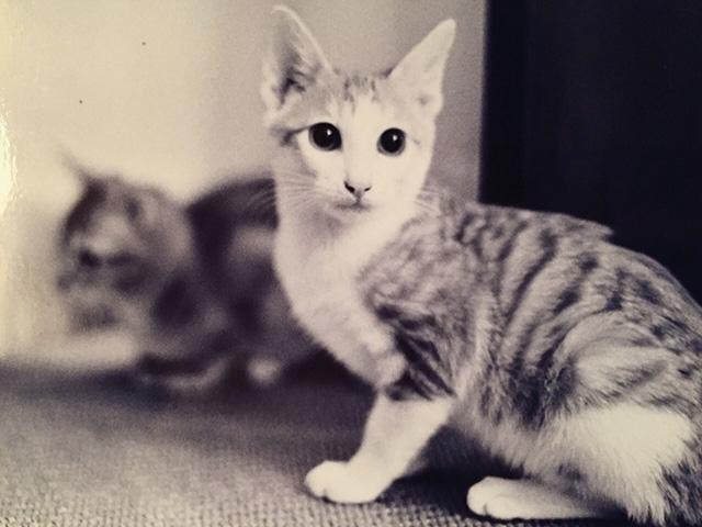 來生再做我的貓,好嗎?